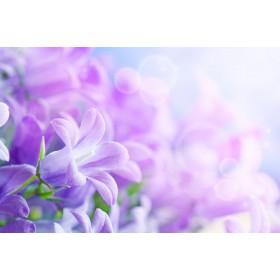 Μωβ Λουλούδι